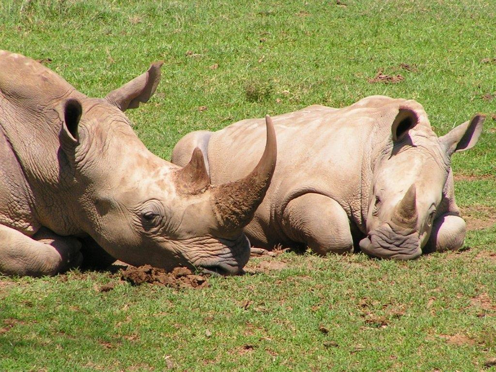 25% of rhino population lost ...